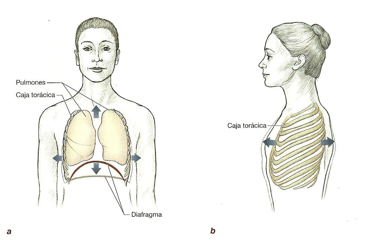 Como librarse del dolor en los riñones por medio de los ejercicios