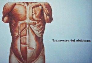 transverso del abdomen pilates david belio